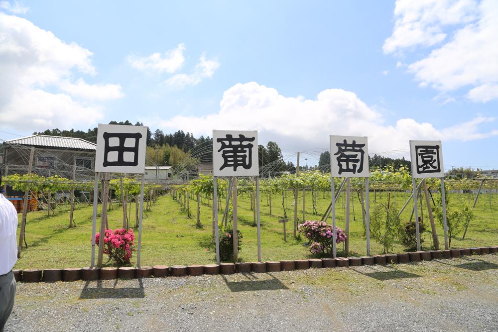 生食葡萄園地