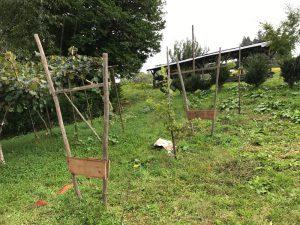 自作の垣根