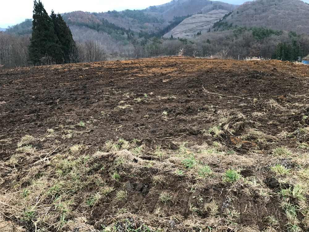 ぶどう園地開墾